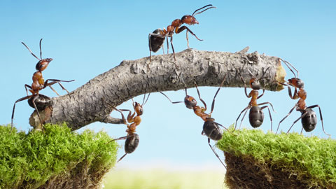 wpid-ants-working-together